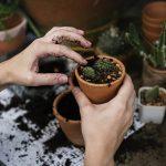 A kertészkedés remek hobbi